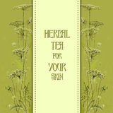 Hand drawn green herbs. Vertical design background. Stock Image