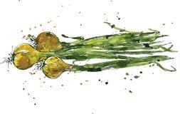 Hand drawn green onions Stock Image