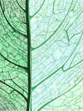 Hand drawn green vertical background with leaf Royalty Free Stock Photo