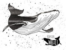 Hand drawn grunge watercolor whale. Vector Stock Photos