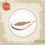 Hand drawn half of papaya fruit with seeds. Sketch style vintage vector illustration Stock Photo