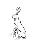 Hand drawn hare Royalty Free Stock Photography