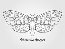 Hand drawn hawk moth silhouette Royalty Free Stock Images