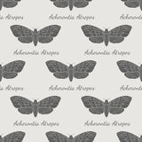 Hand drawn hawk moth vector seamless pattern Stock Photo
