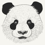 Hand drawn head of cute young panda bear. Modern animal portrait with detailed fur. Stock Photography
