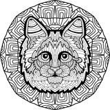 Hand-drawn head of a Maine Coon on the background Royalty Free Stock Images