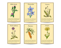 Hand drawn healing herbs sale tag banners. Vintage design with medicinal herbs and flowers illustration Stock Photos