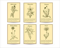 Hand drawn healing herbs sale tag banners. Vintage design with medicinal herbs and flowers illustration. Set of  sketches Royalty Free Stock Photos