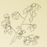 Hand drawn herb Stock Photography
