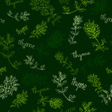 Hand-drawn herb Seamless pattern with thyme Royalty Free Stock Photo