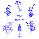 Hand drawn herbal flowers isolated on white background. Vector illustration Stock Photos