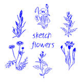 Hand drawn herbal flowers isolated on white background. Vector illustration Stock Photo