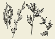 Hand drawn herbal flowers isolated Royalty Free Stock Images