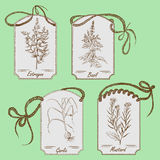 Hand drawn herbs Stock Images