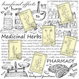 Hand drawn herbs Stock Image