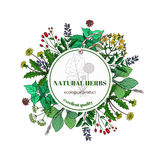 Hand drawn herbs and leaves label. Vector basil thyme, rosemary mint royalty free illustration