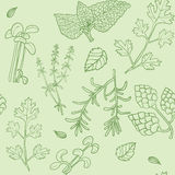 Hand drawn herbs seamless pattern. Hand drawn pattern with herbs. Drop in a swatches panel and use as a tiling fill Stock Photo