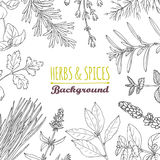Hand drawn herbs and spices background. Culinary template Stock Image