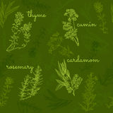 Hand-drawn herbs and spices collection seamless pattern Stock Image