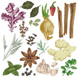 Hand drawn herbs and spices set Stock Photos
