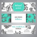 Hand drawn herbs and wild flowers banner Vintage collection of Plants Vector illustrations in sketch style. Botany royalty free illustration