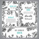 Hand drawn herbs and wild flowers banner Vintage collection of Plants Vector illustrations in sketch style Gift. Hand drawn herbs and wild flowers banner Vintage stock illustration