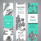 Hand drawn herbs and wild flowers banners Vintage collection of Plants Vector illustrations in sketch style herbal. Hand drawn herbs and wild flowers banners royalty free illustration