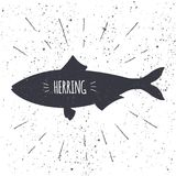 Hand drawn herring icon fish in black and white color with textured background. Design element for emblem, menu, logo. Label, sign, brand mark - vector Royalty Free Stock Photography