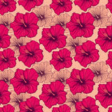 Hand drawn hibiscus flowers Royalty Free Stock Photography