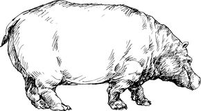 Hand drawn hippo Royalty Free Stock Images