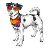 Hand drawn hipster style sketch of cute funny Jack Russell Terrier in glasses and with bandana. Vector Illustration. Isolated on white background Royalty Free Stock Image