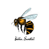 Hand drawn honey bee Stock Images