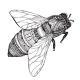 Hand drawn honey bee in zentangle style. Stock Photography