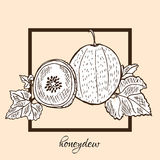 Hand drawn honeydew Royalty Free Stock Photos