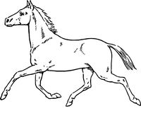Hand Drawn Horse /Eps Stock Image