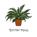 Hand drawn houseplant. Vector illustration of hand drawn boston fern in a pot. Beautiful floral design elements Royalty Free Stock Images