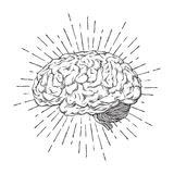 Hand drawn human brain with sunburst anatomically correct art. Flash tattoo or print design vector illustration.  royalty free illustration