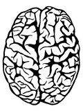 Hand drawn human brain Stock Images