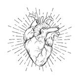 Hand drawn human heart with sunburst anatomically correct art. Flash tattoo or print design vector illustration.  stock illustration