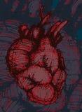 Hand-drawn human heart Royalty Free Stock Photos