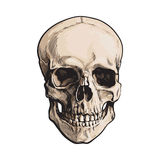 Hand drawn human skull, anatomical model, sketch style vector illustration Royalty Free Stock Photography