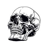 Hand drawn human skull. Hand drawn illustration of anatomy human skull with a lower jaw Stock Images