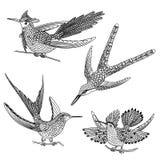 Hand drawn hummingbirds Royalty Free Stock Photos