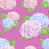 Hand drawn hydrangea flower isolated on pink background Royalty Free Stock Photography