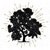 Hand drawn icon with a textured oak tree vector illustration Royalty Free Stock Photo