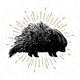 Hand drawn icon with textured porcupine vector illustration Royalty Free Stock Photos