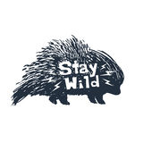 Hand drawn icon with textured porcupine vector illustration. Hand drawn icon with textured porcupine vector illustration and `Stay wild` inspirational lettering Stock Image