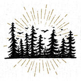 Hand drawn icon with a textured spruce trees vector illustration.  Stock Images
