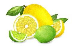 Hand-drawn illustratie van citroen en kalk vector illustratie