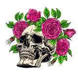 Human skull with a roses wreath Royalty Free Stock Photo